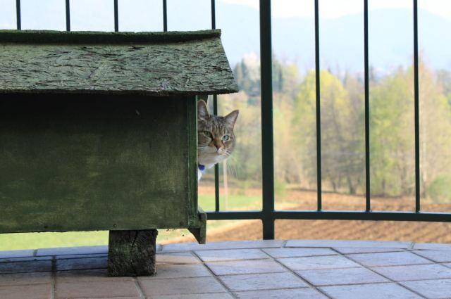 vantaggi e svantaggi del rinascere gatta